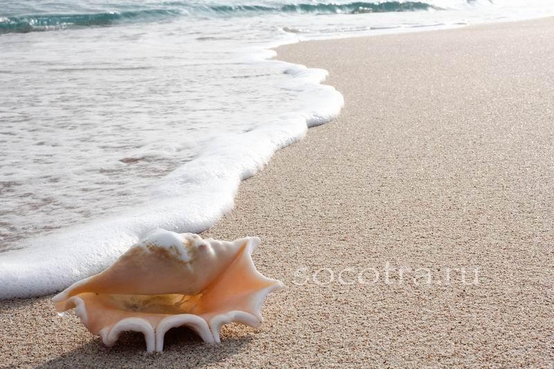 Фотографии Сокотры