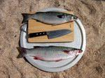Рыба на Сокотре