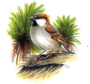 http://www.socotra.ru/assets/images/birds/k17.jpg