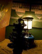 Новый год на Сокотре