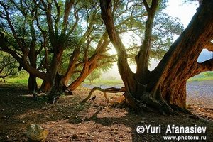 Ayaft, Socotra, photo by Yuri Afanasiev