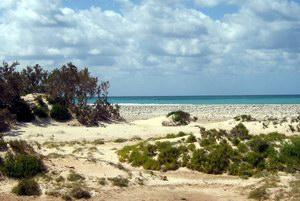 Camel beach, Socotra, Yemen