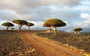 Dixam, Socotra, Yemen