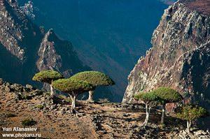 Плато  Dixam, Socotra