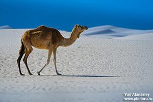 Пески  на южном берегу Сокотры
