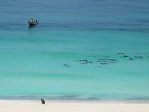 Пляжи Net, Socotra