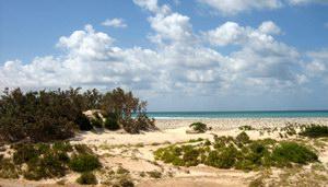 Пляж на Сокотре