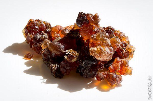 Commiphora Kua - Myrrh from Socotra island